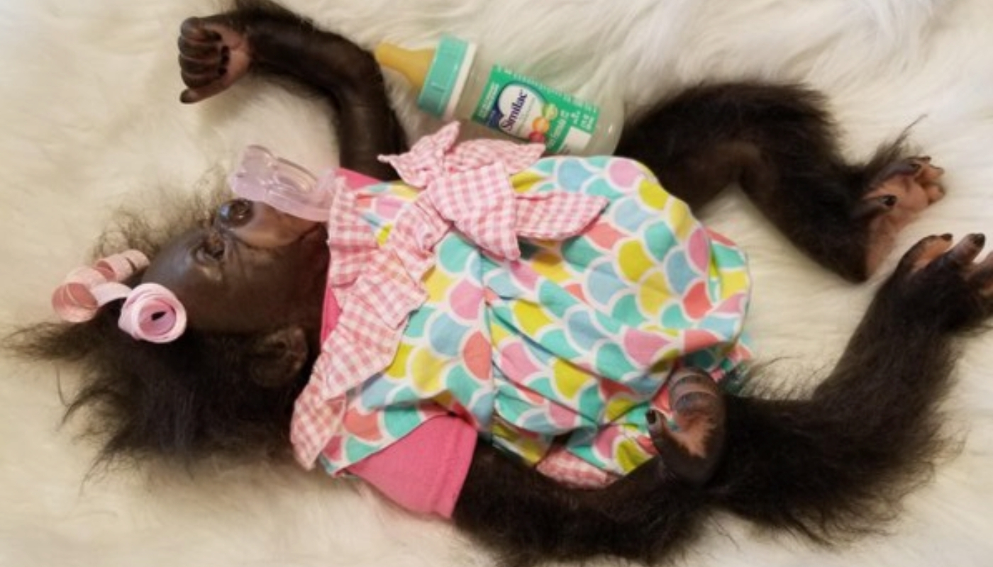 Reborn Monkey Laying with Bottle